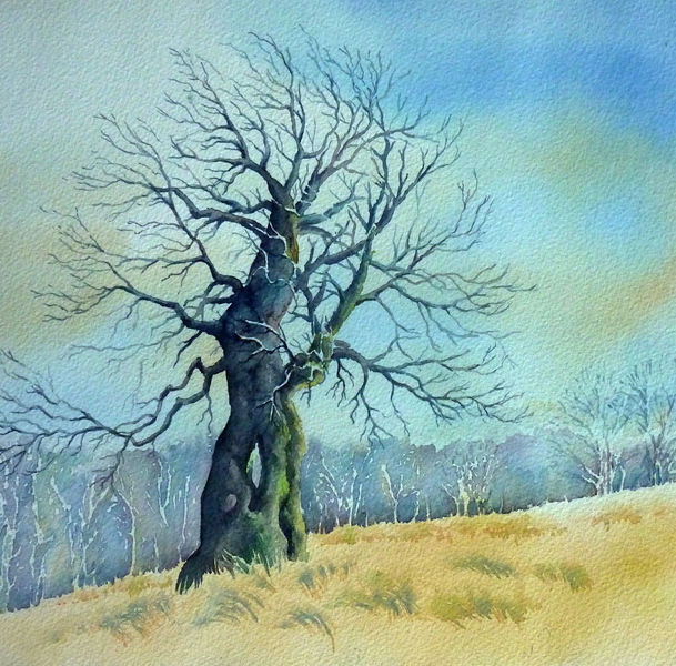 Baum, Aquarellmalerei, Hutebuche, Rhön, Winterende, Buch