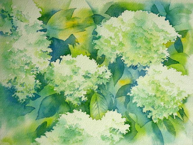Hortensien, Blumen, Aquarellmalerei, Grün, Aquarell