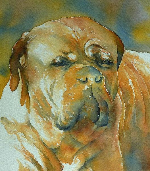 Aquarellmalerei, Hund, Portrait, Hundeaugen, Aquarell