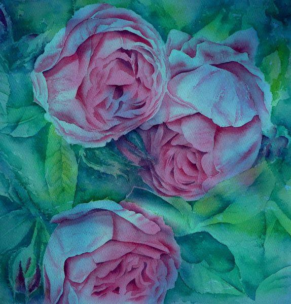 Aquarellmalerei, Alt, Englisch, Rose, Blumen, Aquarell