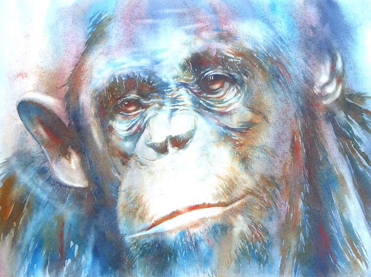 Tiere, Menschenaffen, Aquarellmalerei, Persönlichkeit, Schimpanse, Affe