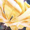 Einladung, Gelb, Aquarellmalerei, Tulpen