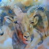 Widder, Bergschaf, Aquarellmalerei, Mountain sheep