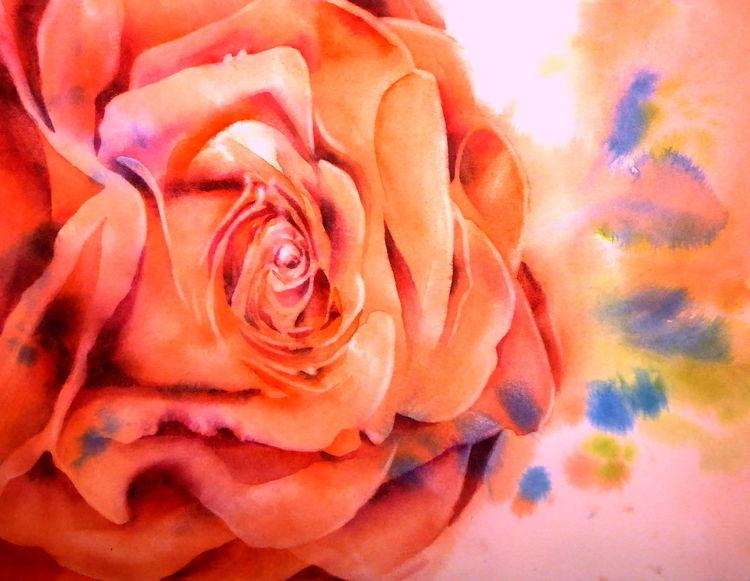 Blumen, Aquarellmalerei, Rot, Rose, Aquarell