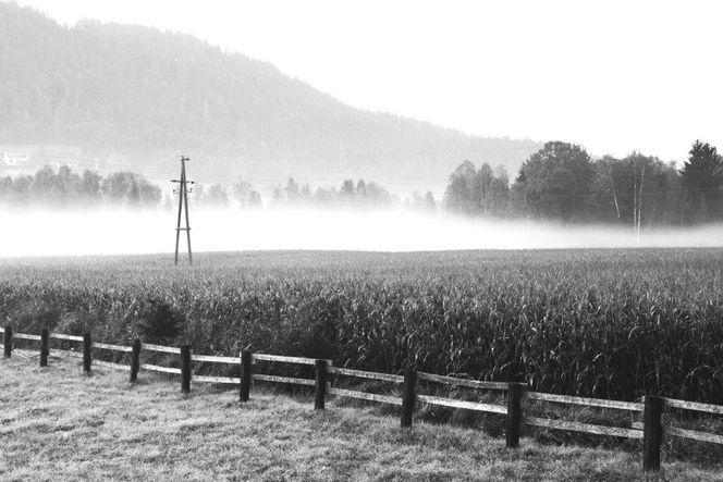 Moor, Schwarz weiß, Nebel, Natur, Fotografie, Landschaft