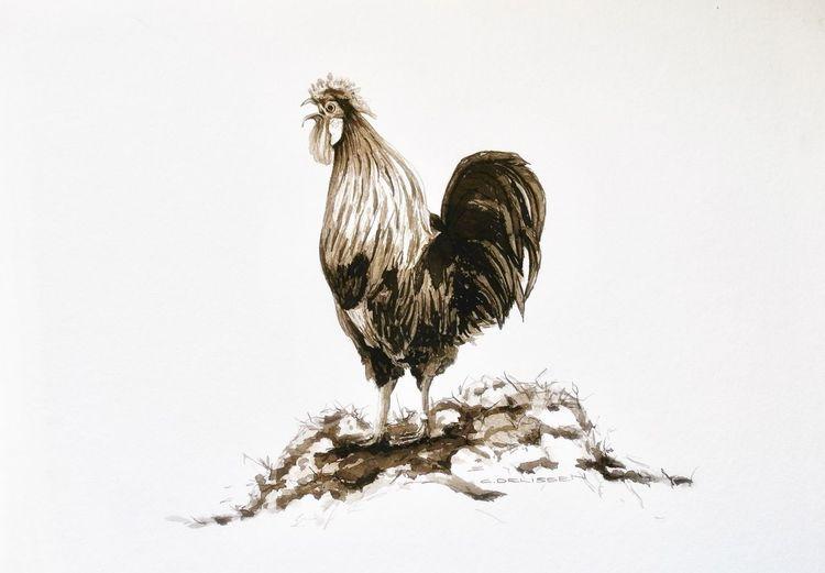 Huhn, Tuschezeichnung, Hahn, Sepia, Geflügel, Zeichnungen