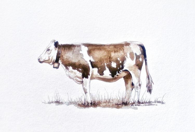 Kuh, Sepia, Tusche, Zeichnungen