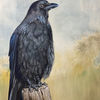 Vogel, Tiere, Gemälde, Krähe