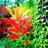 Blätter, Rot, Gelb, Herbst