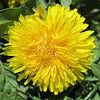 Natur, Blumen, Fotografie