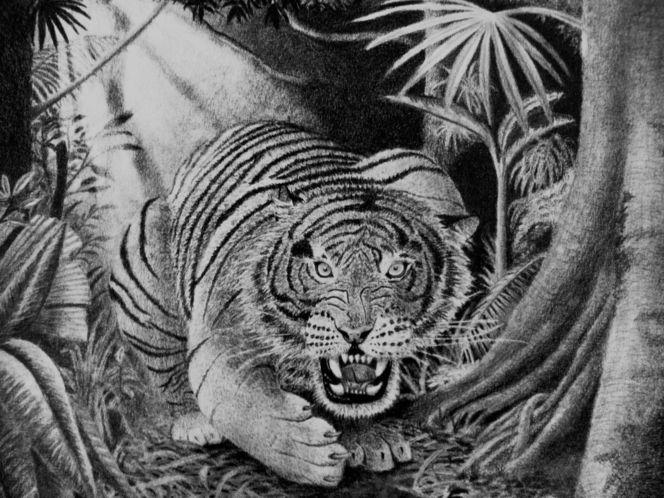 Urwald, Tiger, Zeichnung, Bleistiftzeichnung, Zeichnungen