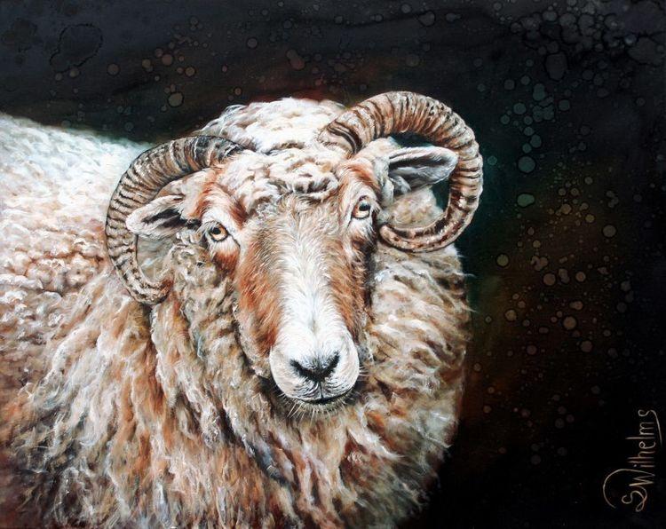 Wolle, Heidschnucke, Bock, Schaf, Horn, Hausschaf
