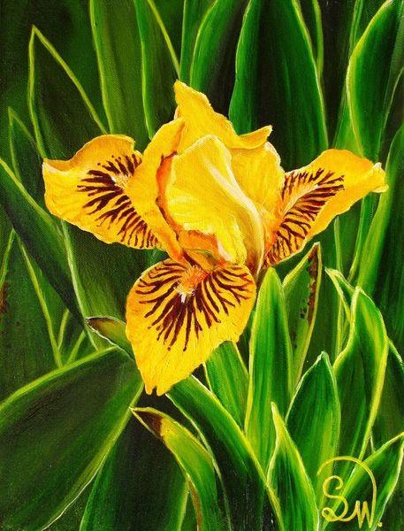 Frühling, Gelb, Zwergiris, Lilie, Iris, Blätter