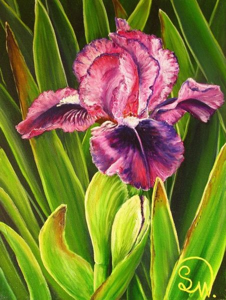 Irisblüte, Harmonie, Blätter, Zwergiris, Grün, Iris