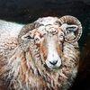 Wolle, Heidschnucke, Bock, Schaf