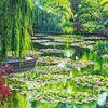 Grün, Teichrosen, Wasser, Ufer