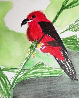 Auarellfarben, Tuschestift, Rot, Vogel, Aquarell, Tiere