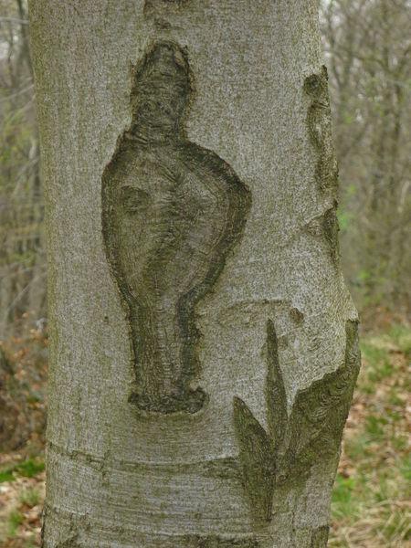 Baum, Natur, Baumgeist, Indianer, Freiheit, Fotografie