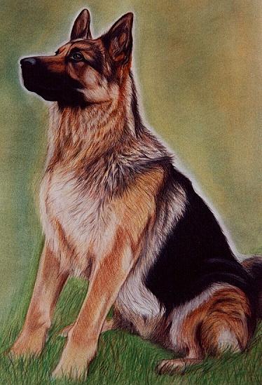 Hundebilder, Malerei, Malen, Zeichnung, Hundeportrait, Schäferhund