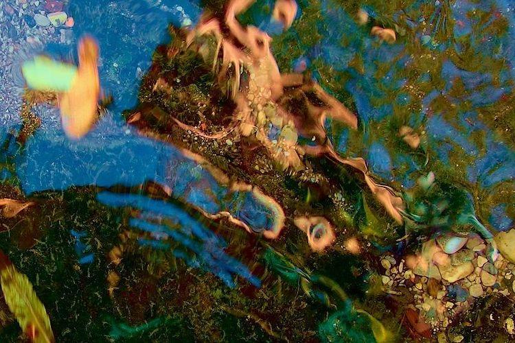 Landschaft, Wasser, Pflanzen, Fotografie, Ausdruck, Betrachtung