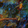 Wasser, Pflanzen, Ausdruck, Fotografie