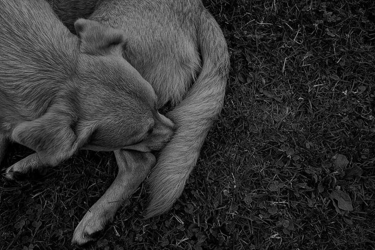 Fotografie, Tiere, Ausdruck, Ruhen