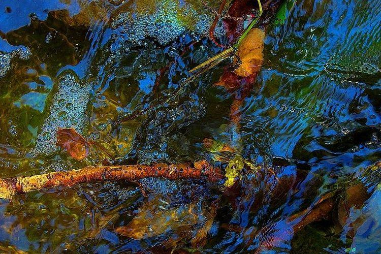 Fotografie, Landschaft, Wasser, Pflanzen, Ausdruck, Augen