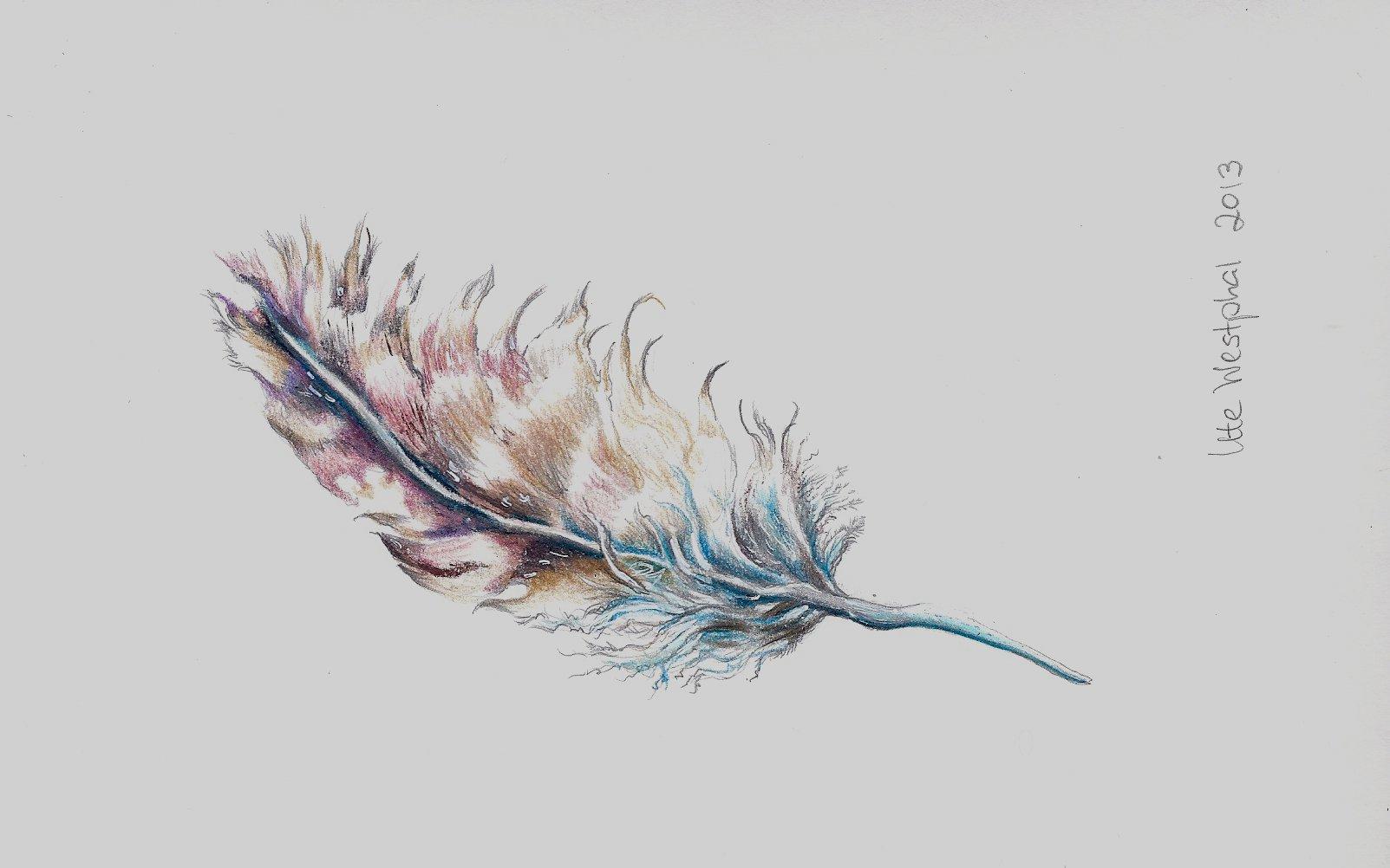 feder feder vogel gefieder buntstifte feder zeichnungen. Black Bedroom Furniture Sets. Home Design Ideas
