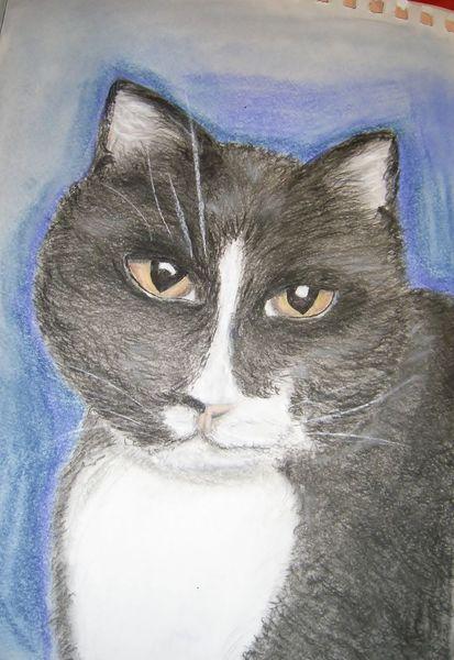 Katze, Pastellmalerei, Kohlezeichnung, Zeichnungen, 2012