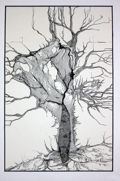 Linie, Raum, Struktur, Netz, Wurzel, Zeichnungen