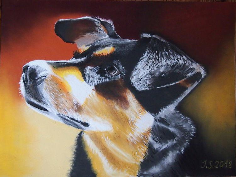 Hund, Mischling, Hundeblick, Malerei