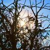 Baum, Winter, Sonne, Fotografie
