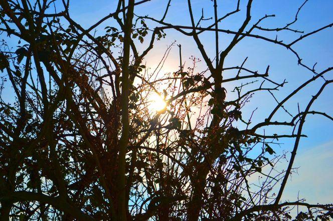 Winter, Sonne, Baum, Fotografie