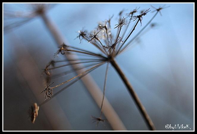 Winter, Eis, Strauch, Fotografie, Pflanzen