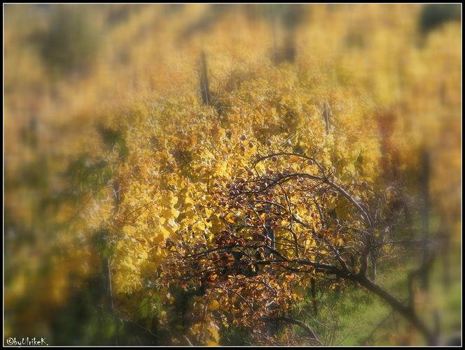 Herbst, Wald, Altweibersommer, Goldenoktober, Fotografie