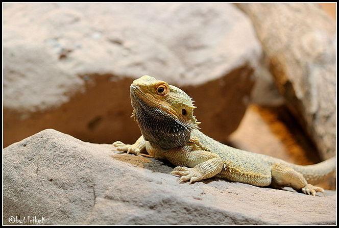 Reptilium, Fotografie, Tiere