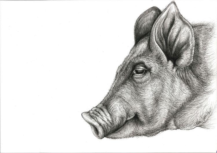 Ausdruck, Sau, Lächeln, Gesicht, Portrait, Schwein