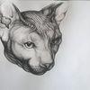 Katze, Portrait, Dame, Zeichnungen