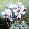 Alpenveilchen, Pflanzen, Malerei