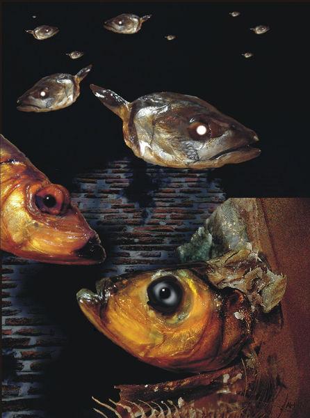 Fisch, Fotomontage, Lippenstift, Digitale kunst