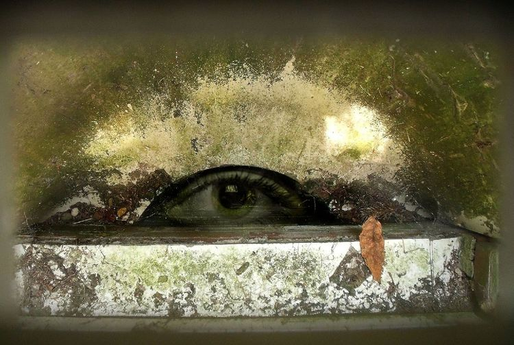 Erblickt, Augen, Grünspan, Moos, Fotografie, Grün
