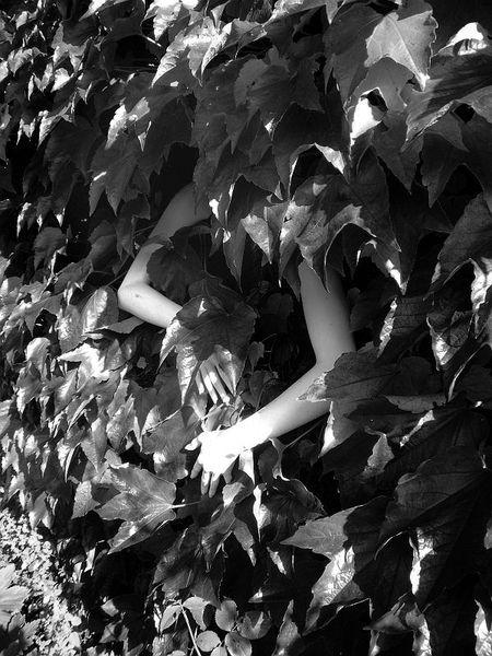 Arm, Weiß, Neugier, Grau, Weinlaub, Fotografie