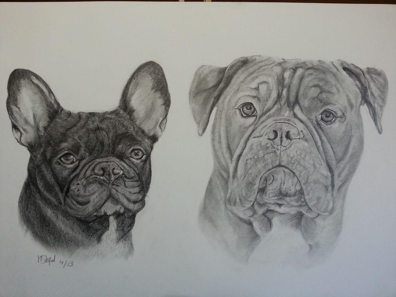 Urmel Und Mini Hund Bulldogge Französische Bulldogge