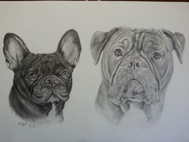 Hund, Bulldogge, Französische bulldogge, Zeichnungen, Tiere bleistift,