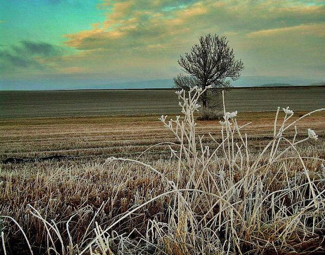 Frost, Wintwr, Baum, Solitär, Landschaft, Fotografie