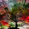 Baum, Fotografie