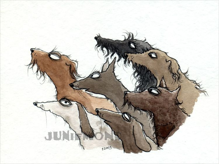 Hund, Illustrationen, Tiere