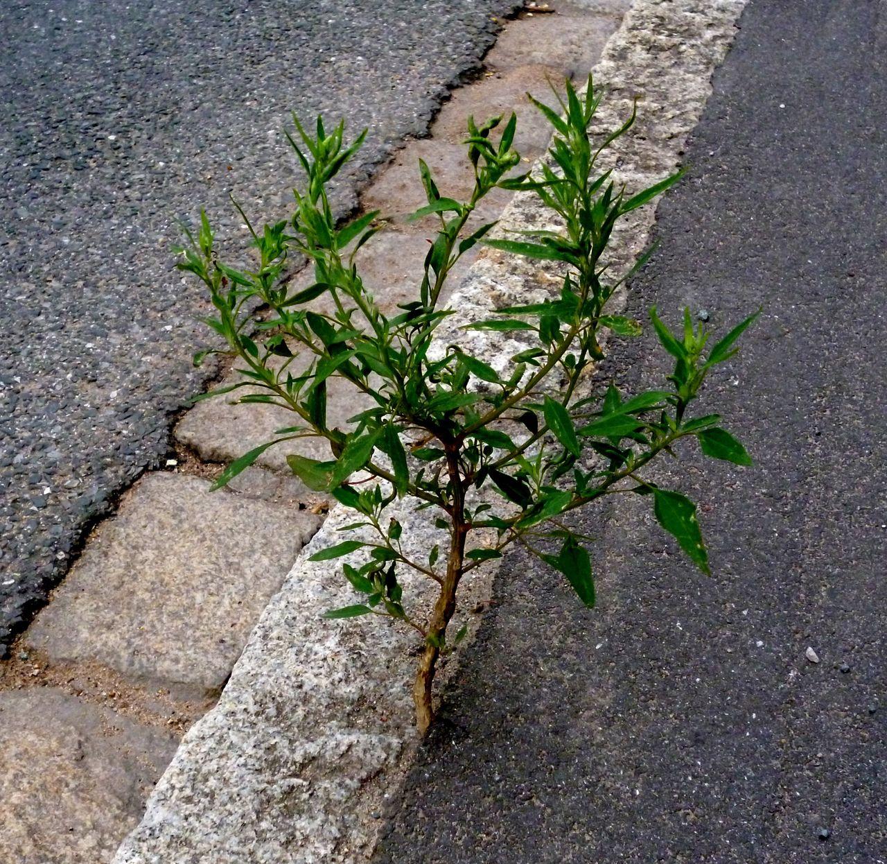 Bild asphalt baum stra e pflanzen von helmut artmann for Baum pflanzen