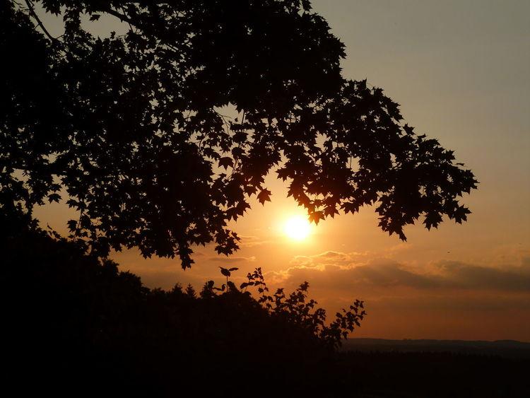 Sonne, Himmel, Wolken, Baum, Fotografie, Worte