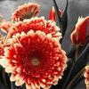 Blumen, Liebe, Blumenstrauß, Orange